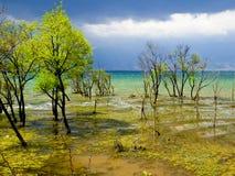 Arbres élevant le lac intérieur Erhai Images stock