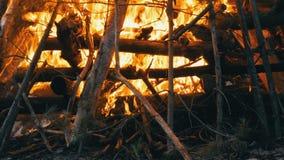 Arbres émettants de la vapeur de combustion lente qui s'éteignent le pompier avec de l'eau Le feu dans la forêt banque de vidéos