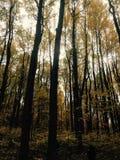 Arbres étonnants en automne Photographie stock