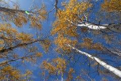 arbres Photos stock