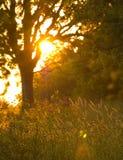 Arbres 2 de lever de soleil images stock