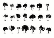 Arbres. Images stock