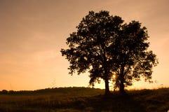 Arbres 4 de lever de soleil Photo libre de droits