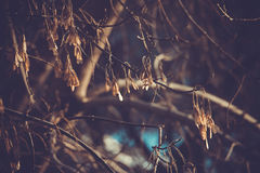 Arbres Photographie stock