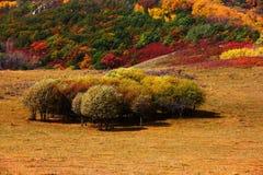 arbres Images libres de droits
