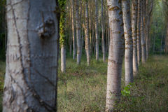 Arbres photo stock