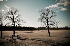 arbres photo libre de droits