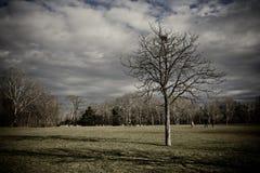 arbres photo stock