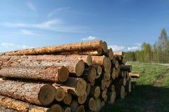 arbres abattus Photographie stock libre de droits