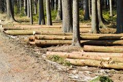 Bois de construction d'abattage Photographie stock libre de droits