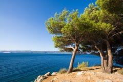 Arbres adriatiques Images stock