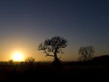 arbres africains de coucher du soleil Image libre de droits