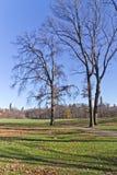 Arbres au Central Park Image libre de droits