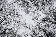 Arbres au ciel Image libre de droits