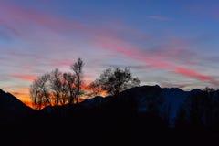 Arbres au coucher du soleil Image stock