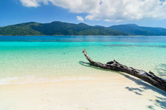 Arbres au-dessus d'une plage sablonneuse Photo stock