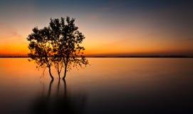 Arbres au-dessus de coucher du soleil Images stock