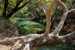 Arbres au-dessus des eaux vertes de la rivière Photo stock