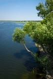 Arbres au-dessus du fleuve Photo libre de droits