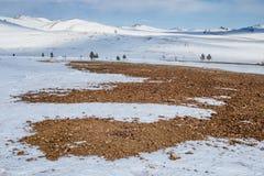 Arbres au fond de montagnes d'hiver Images libres de droits