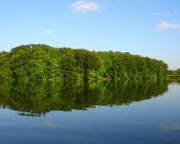 Arbres au lac Images stock