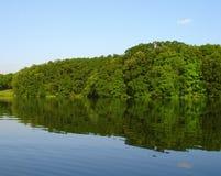 Arbres au lac deux Image libre de droits