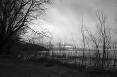 Arbres au lac et au ciel déprimé Image stock