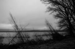 Arbres au lac et au ciel déprimé Images libres de droits