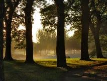 Arbres au lever de soleil Images libres de droits