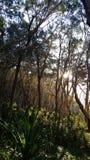 Arbres au parc national de noosa Photos stock