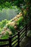 Arbres au printemps dans la ville de la Chine Chongqing Images libres de droits