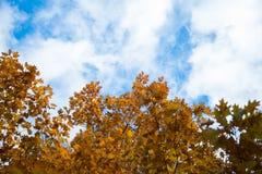 Arbres automnaux et ciel bleu images libres de droits