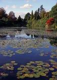 Arbres automnaux et lilly un étang Photos stock