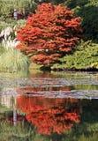 Arbres automnaux et lilly un étang Image libre de droits