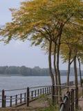 arbres avec des feuilles d'automne chez le Rhin, Rees, Allemagne photographie stock