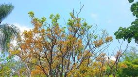 Arbres avec des fleurs une journée de printemps ensoleillée photos libres de droits