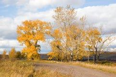Arbres avec des lames d'automne Photographie stock