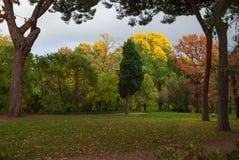 Arbres avec l'automne en couleurs images stock