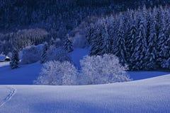 Arbres avec la neige Photos stock