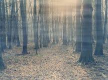 Arbres avec le brouillard Photographie stock libre de droits