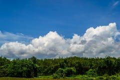 Arbres avec le ciel bleu Photos libres de droits
