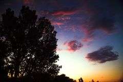Arbres avec le ciel rose et bleu de lever de soleil Photographie stock