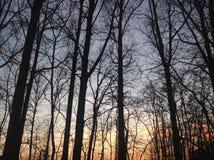 Arbres avec le coucher du soleil Image libre de droits