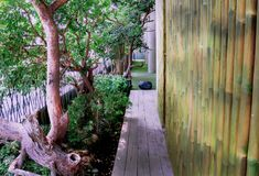 Arbres avec le mur en bambou dans le style asiatique Photo stock