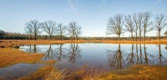 Arbres avec les branches nues reflétées dans l'eau lisse de miroir d'un simple dans l'hiver image libre de droits