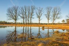 Arbres avec les branches nues reflétées dans l'eau lisse de miroir d'un simple dans l'hiver photos libres de droits