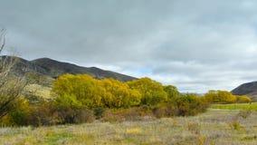 Arbres avec les feuilles d'automne jaunes à Cantorbéry Photos stock