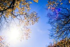 Arbres avec les feuilles jaunes rougeoyant sous les rayons du soleil lumineux contre le ciel bleu Horizontal coloré d'automne photo stock