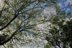 Arbres avec les feuilles vertes photo libre de droits