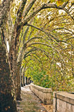 Arbres avec les lames jaunes le long du fleuve Tiber à Rome Images libres de droits